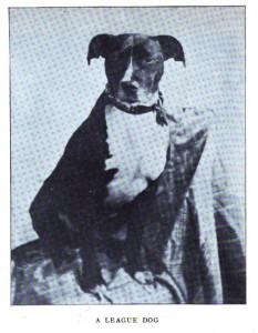 ARL Boston 1908_A League Dog