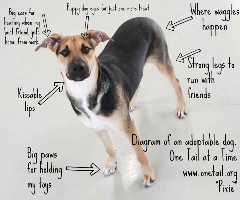 Diagram Of An Adoptable Dog