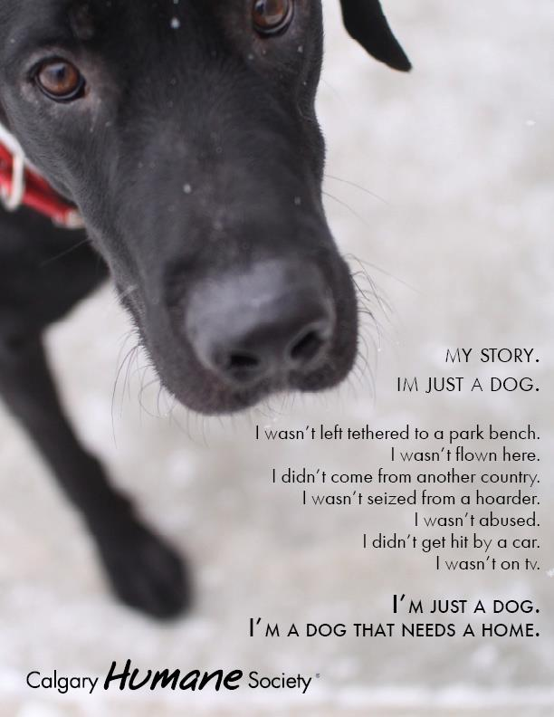 My Story – I'm Just a Dog | Beyond Breed