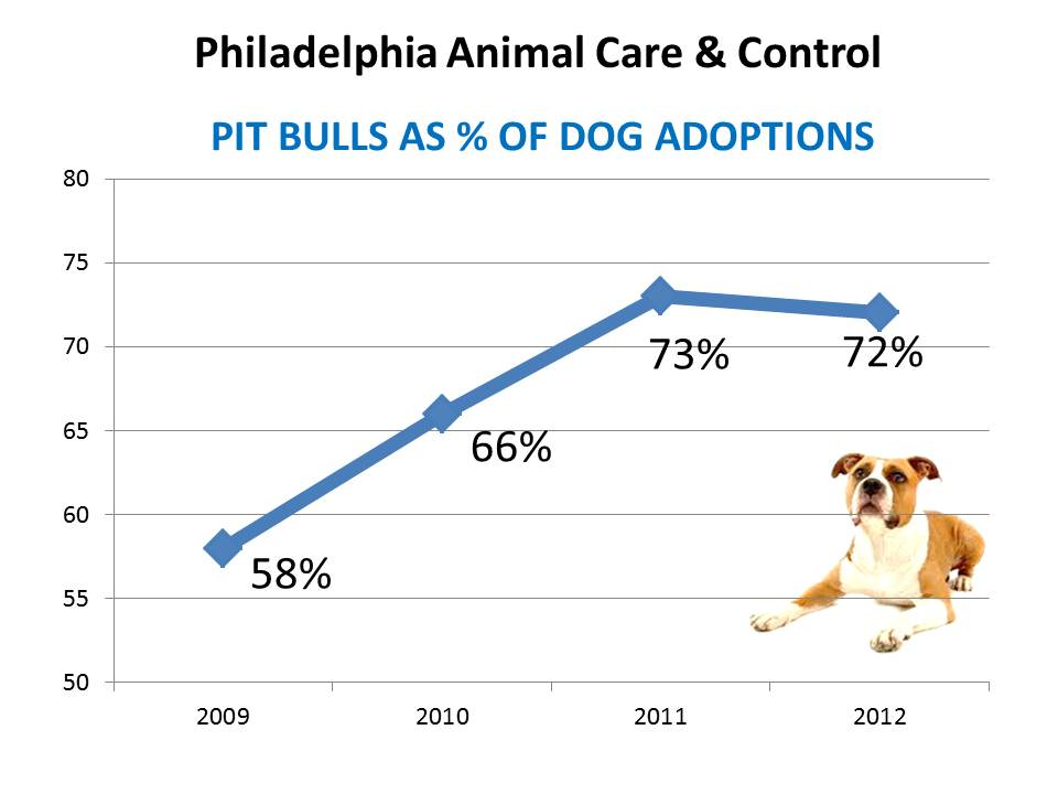 Dog Adoptions at Philly ACCT