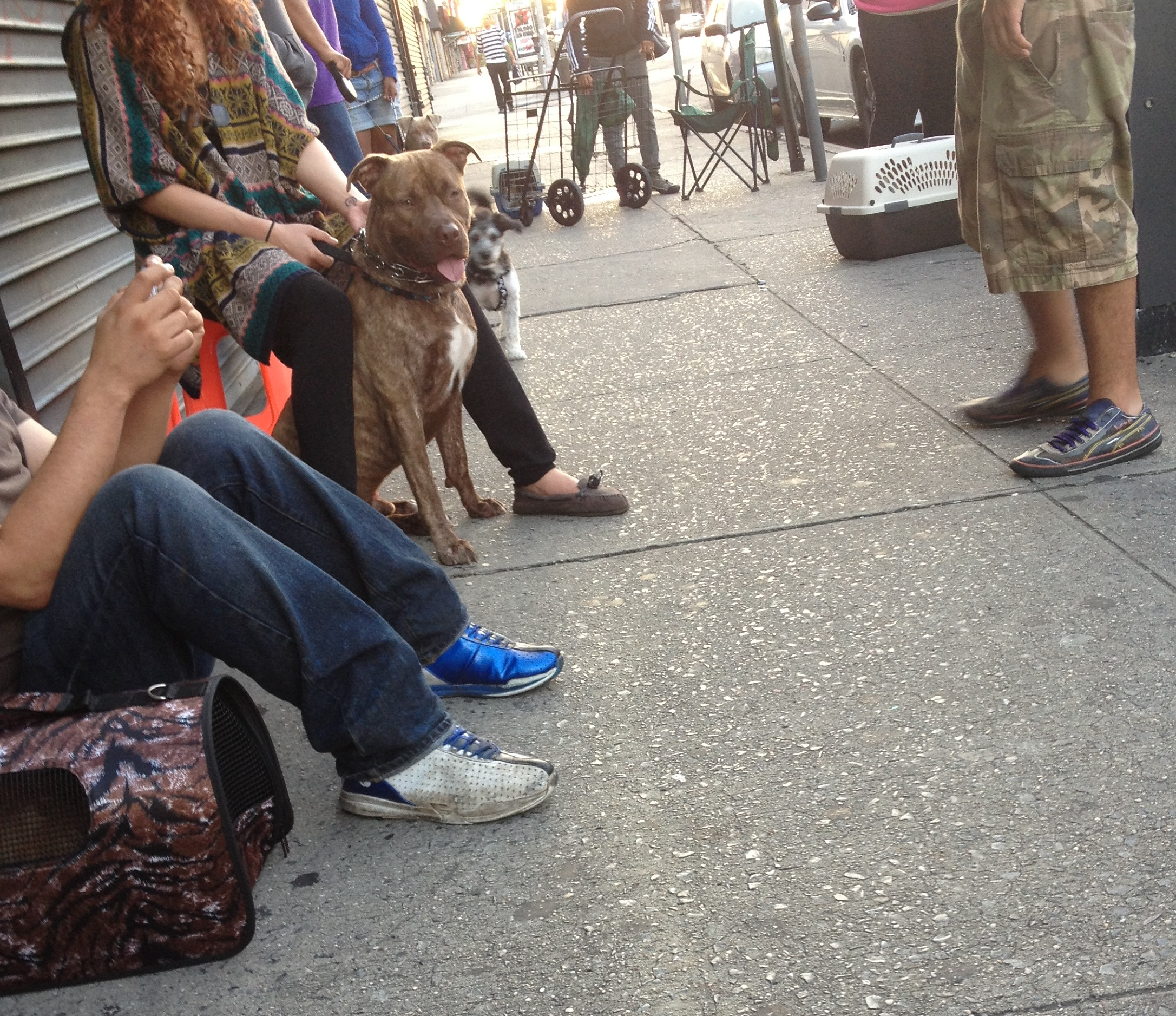 Starting at 5:00 am, New Yorkers form a line to access low-cost spay/neuter services for their pets.