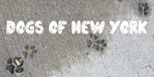 Dogs of New York_Logo