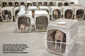 Photo Credit: HSUS. Some of the dogs seized from Spindletop, a rescue that neglected the dogs in its care.