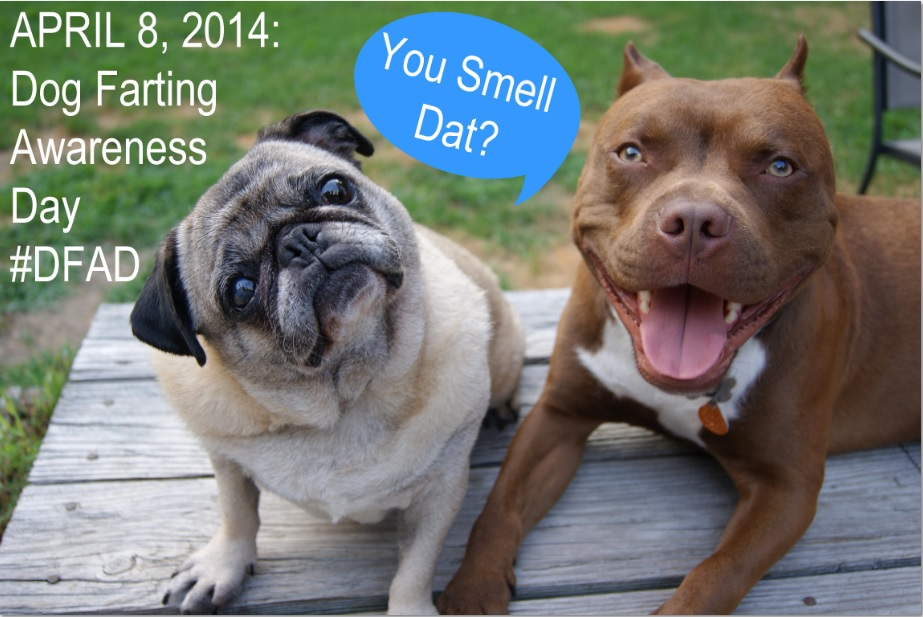 Dog Farting Awareness Day