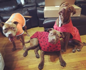 Rose, Sheeba, and Butch: December 2015